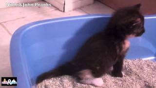 getlinkyoutube.com-Kitty pooping in a litter box for te firs time ever! Warning: CUTE!