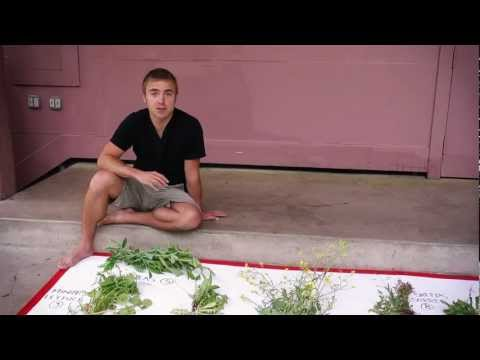WIld Edibles with Sergei Boutenko (part 1 of 4)