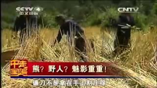 getlinkyoutube.com-20150321 走遍中国  熊?野人?魅影重重!