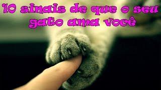 getlinkyoutube.com-10 sinais de que o seu gato ama você. #26