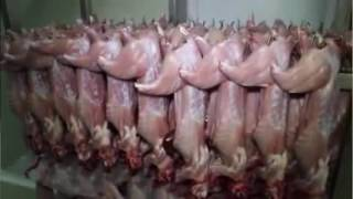 Intregated Rabbit Farming...Breeders Must Watch !!!