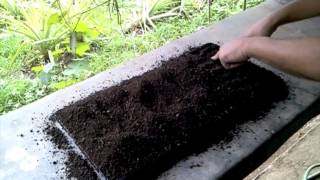 getlinkyoutube.com-Organic Farming in the Philippines (making seedlings)