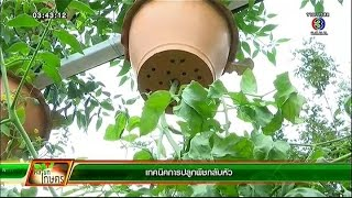 getlinkyoutube.com-คลินิก เกษตร | เทคนิคการปลูกพืชกลับหัว | 14-01-58