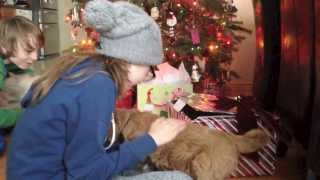 getlinkyoutube.com-Golden Doodle Christmas Present For The Children