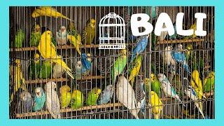 getlinkyoutube.com-BALI, the graphic Bird Market (Pasar Burung) in Denpasar, INDONESIA