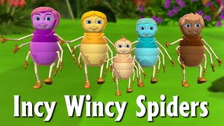 getlinkyoutube.com-Incy Wincy Spider Nursery Rhyme | Itsy Bitsy Spider  - 3D Animation Rhymes & Songs For Children
