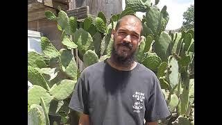 HIPPY KILLER 2013 SLIMS KAWA TRIPLE