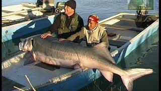 Lov i ribolov - Delta Urala 2