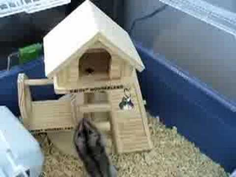 Videos Related To 'hamstercam - Part 4'