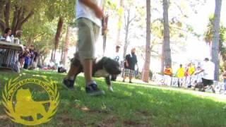getlinkyoutube.com-American Bully Dog Show 8-15-09 Vallejo CA