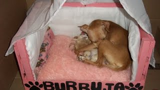 getlinkyoutube.com-Como hacer una cama para  mascotas
