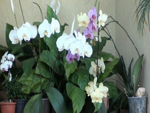 Floreiras, jardinagem, Plantas ornamentais,