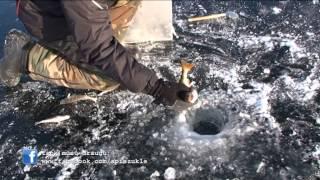 """getlinkyoutube.com-""""Apie žūklę"""" 2014 02 08. Poledinė didžiųjų ešerių žūklė ežeruose."""