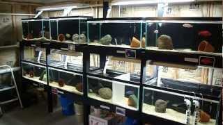 getlinkyoutube.com-My Fish Room Update 26 Tank Total