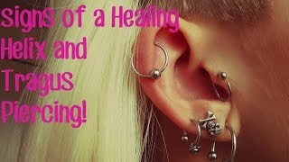 Signs of a Healing Helix & Tragus Piercing.