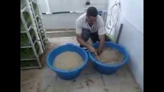 الجزائـــر الزراعة المائية اسـتـنـبـات الشـعـيـر 4 Hydroponics barley breeding