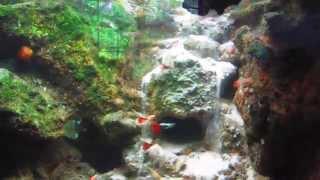 getlinkyoutube.com-500 Gallon Fish Tank with Underwater Waterfall