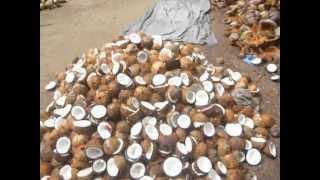 getlinkyoutube.com-Sri  Lanka,ශ්රී ලංකා,Ceylon,Coconut processing