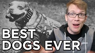 getlinkyoutube.com-Top 10 Best Dogs Ever