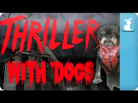 Thriller...With Dogs - Petody