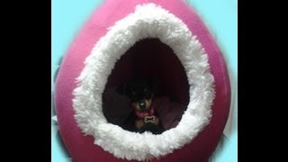 getlinkyoutube.com-Como Hacer Una Cama Para Perro o Gato
