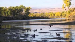 getlinkyoutube.com-Montana Duck and Goose Hunting
