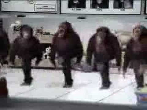 Irish dancing monkeys