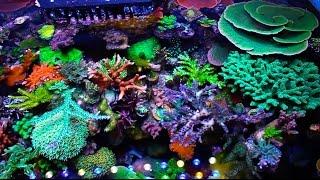 getlinkyoutube.com-Hernan Chaves 75 Gallon Reef Tank - Reef Lounge USA