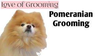 getlinkyoutube.com-Grooming a Pomeranian