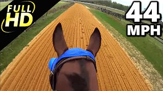 getlinkyoutube.com-Jockey Cam Horse FAST Galloping 44mph. GoPro Hero 3