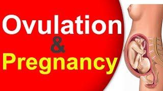கருமுட்டையின் உருவாக்கம் & கருத்தரித்தலும்  | Infertility IVF IUI ICSI testtube baby
