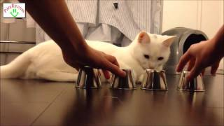 Gato esperto acerta sempre no copo