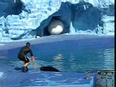 Videos Related To 'mundo Marino - Delfines Y Orca - Parte 2