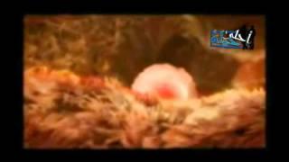 getlinkyoutube.com-فيديو رائع لمراحل تكوين الجنين داخل رحم الأم