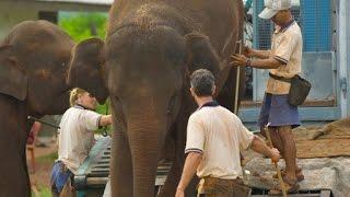 getlinkyoutube.com-Flight of the Elephants - National Geographic (Documentary)