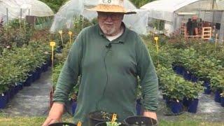 Come si semina le rose: tutti segreti (le guide)