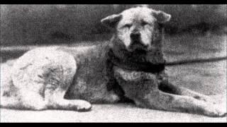 getlinkyoutube.com-Homenagem a Hachiko, o cão héroi