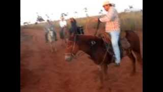 getlinkyoutube.com-Burro selvagem em cavalgada!! biro biro!!