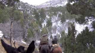 getlinkyoutube.com-2013 Utah Cougar Hunt