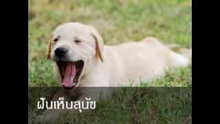 getlinkyoutube.com-ฝันเห็นสุนัข หมายถึงอะไร (เลขเด็ด)