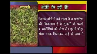 getlinkyoutube.com-Ayurvedic Benefits of Tulsi for Toothache   Acharya Balkrishna
