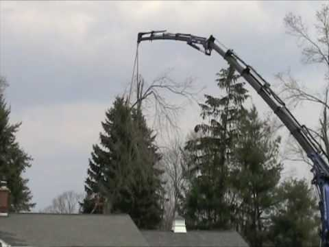 ALLMARK Tree Removal using an Effer crane from NALE