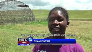 Konservasi Burung Derek yang Hampir Punah di Afrika Selatan - NET5