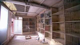 "getlinkyoutube.com-Virginie Claes: PIPA ambassadrice in ""man bijt hond"""