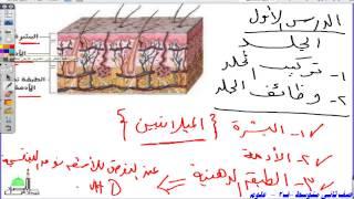 getlinkyoutube.com-ثاني متوسط  علوم  الجلد