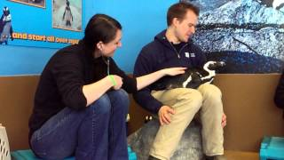 getlinkyoutube.com-Penguin encounter at Mystic Aquarium