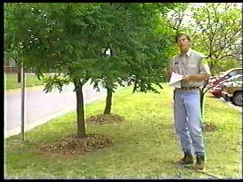 Proper Tree Pruning Methods Part 1