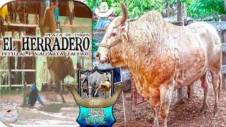 getlinkyoutube.com-NI LA LLUVIA LOS DETUVO!!! Rancho El Varal en el Torneo de Puerto Vallarta