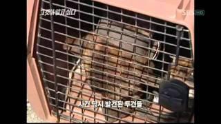 getlinkyoutube.com-그것이 알고싶다 인간을 위한 한 평생, 동물의 삶에 관한 보고서 2