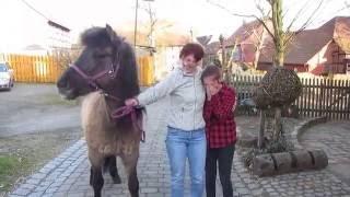 getlinkyoutube.com-Mein erstes eigenes Pferd. Islandpferd Tyra zieht ein.